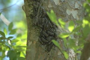 Bell - slugs