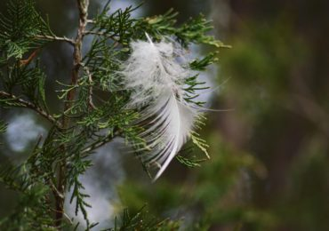 Idea for the Weekend: Feather Hunt!