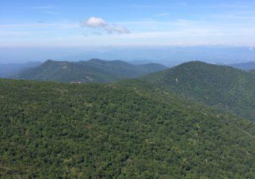 A Leaf Peeper's Dream: Craggy Pinnacle, North Carolina