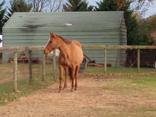 Horses: The Quintessential Outdoorsy Animal