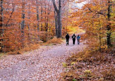 Idea for the Weekend: Take a Gratitude Walk