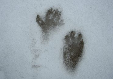 Idea for the Weekend: Look for Animal Tracks
