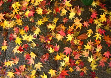 Activity of the Week: Create Leaf and Bark Rubbings