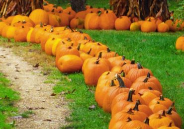 Welcome, Fall! 21 Activities for the Season