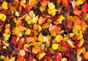 Idea for the Weekend: Craft with Fall Leaves