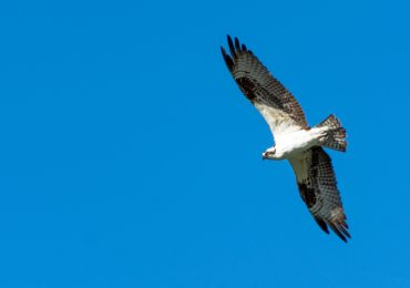 The Nature Conservancy in South Carolina's Annual Hawk Watch