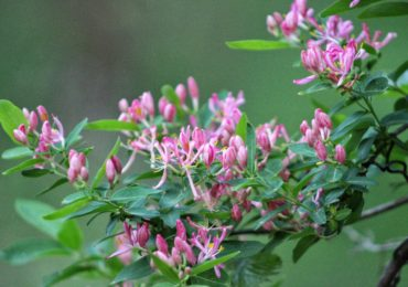 12 Ways to Celebrate Spring