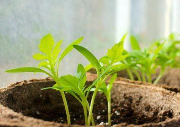 Activity of the Week: Start Seeds Indoors