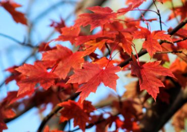 Activity of the Week: Make a Thankful Tree